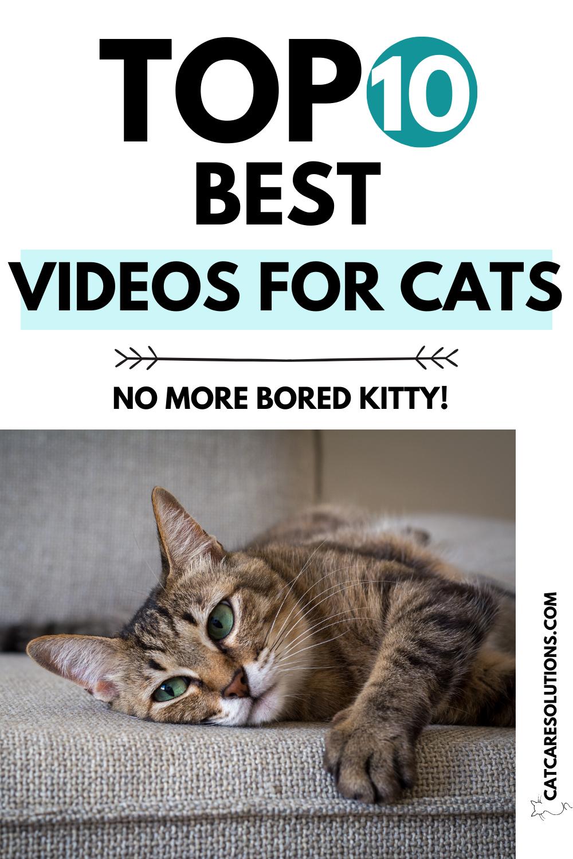 Top 10 Videos Cats Watch