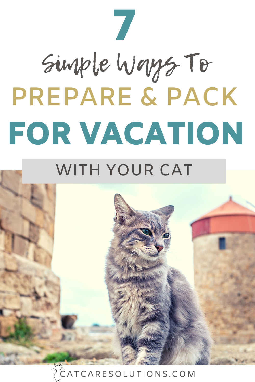 Cats On Vacation: 7 Things To Prepare And Pack