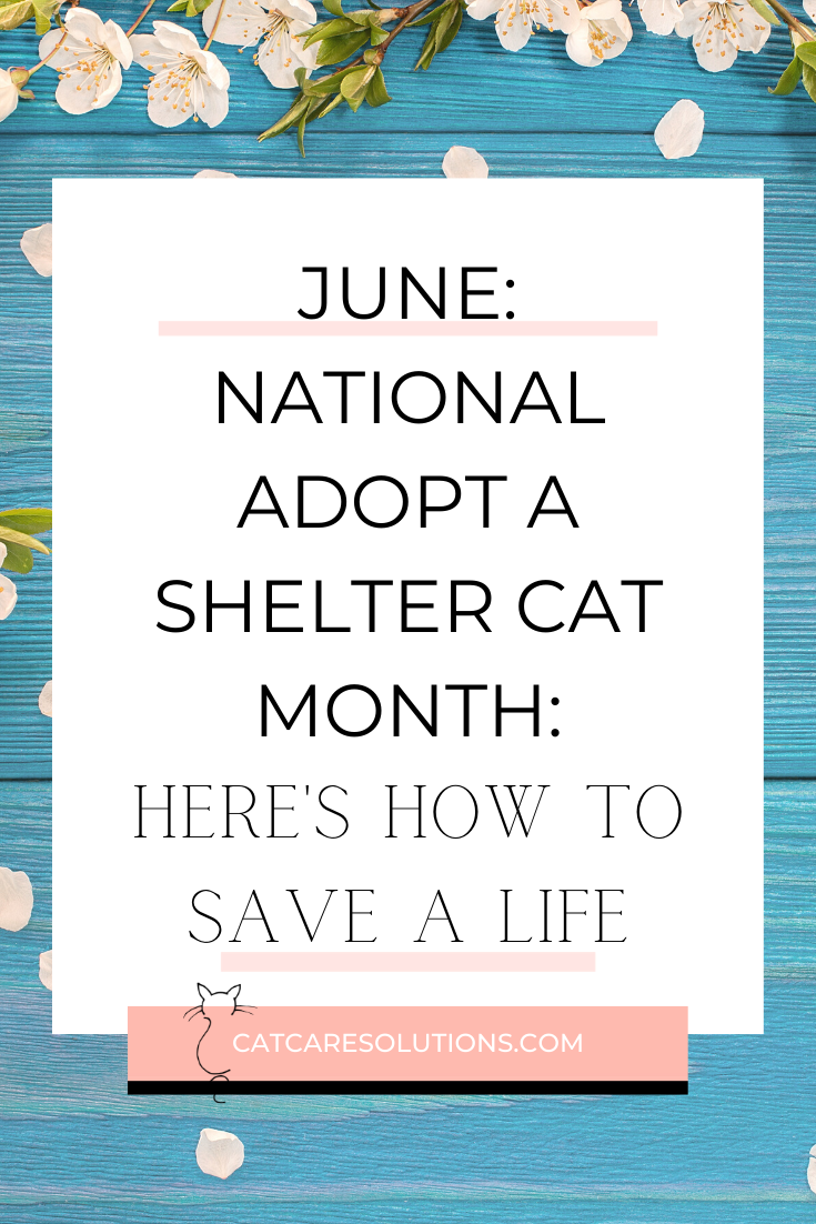 June Is Adopt A Shelter Cat Month: Save A Life Today!