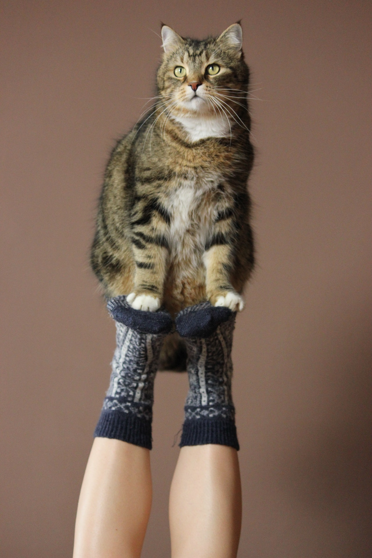 How To Train a Cat: Helpful Tips, Tricks, and Treats!