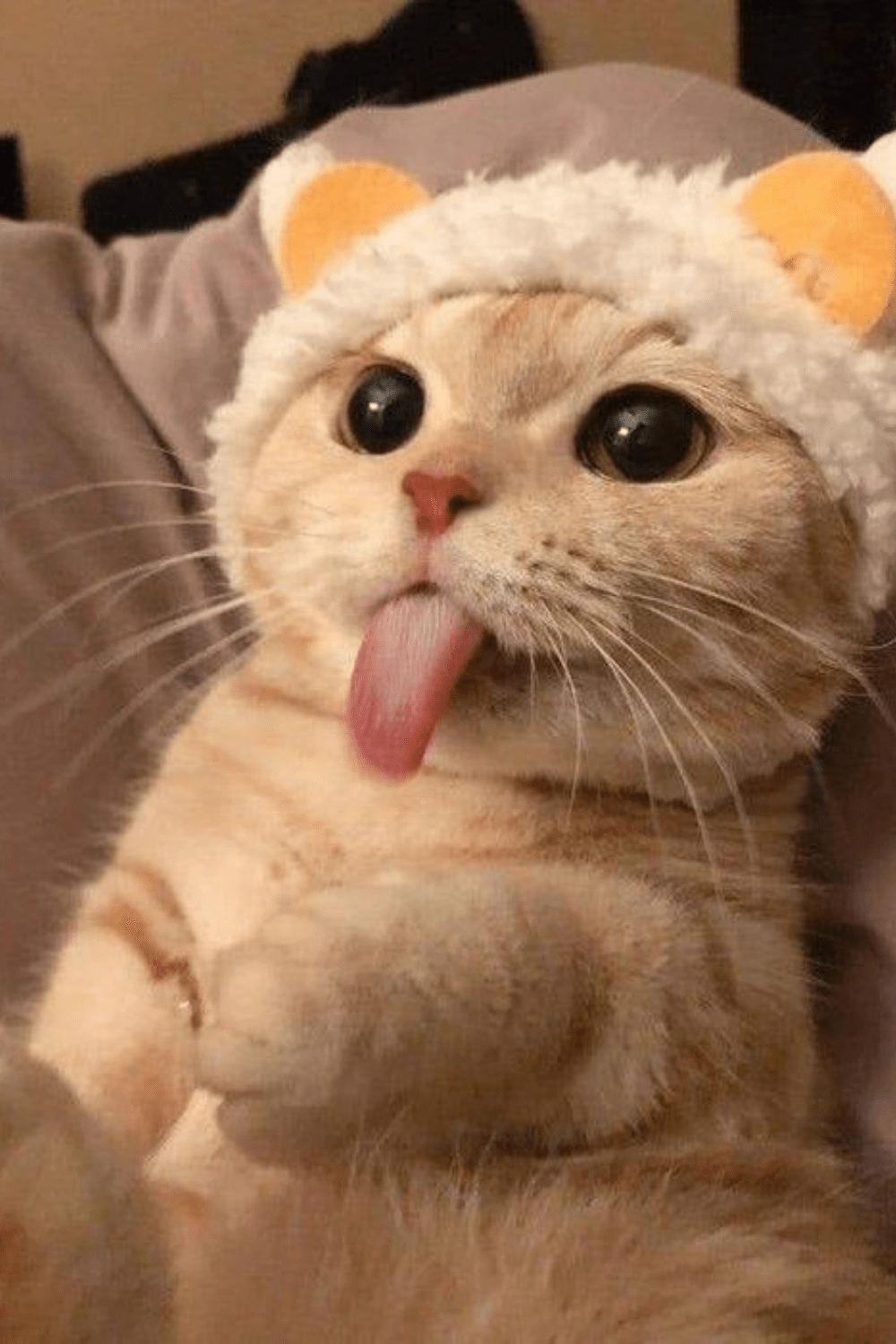 20 Funny Cat Memes for Funny Cat Friday