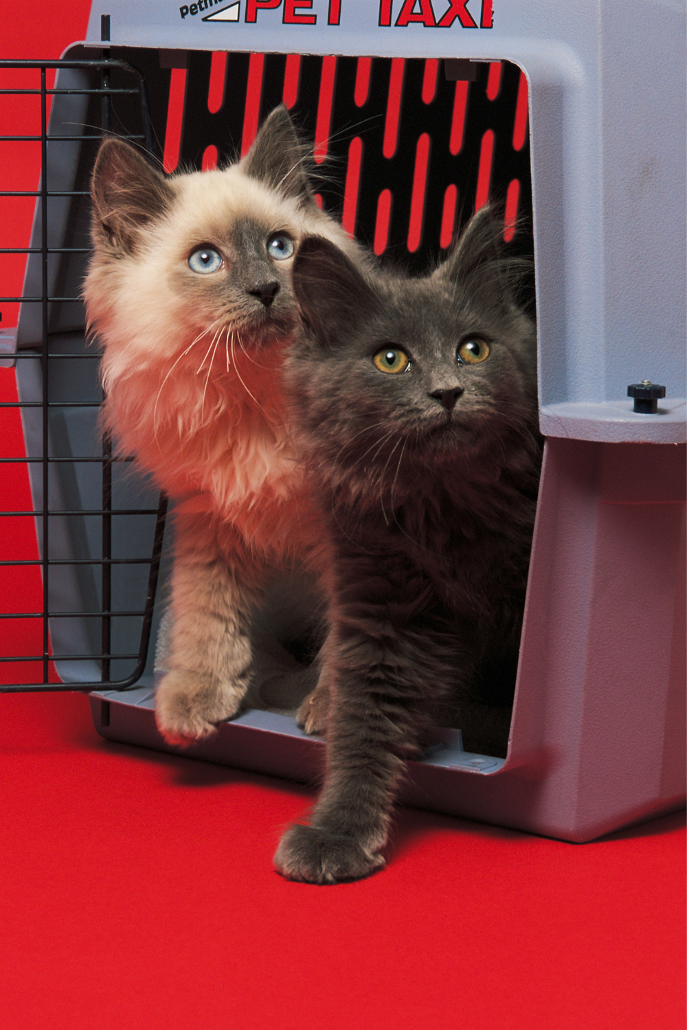 4 best cat carriers for large cats