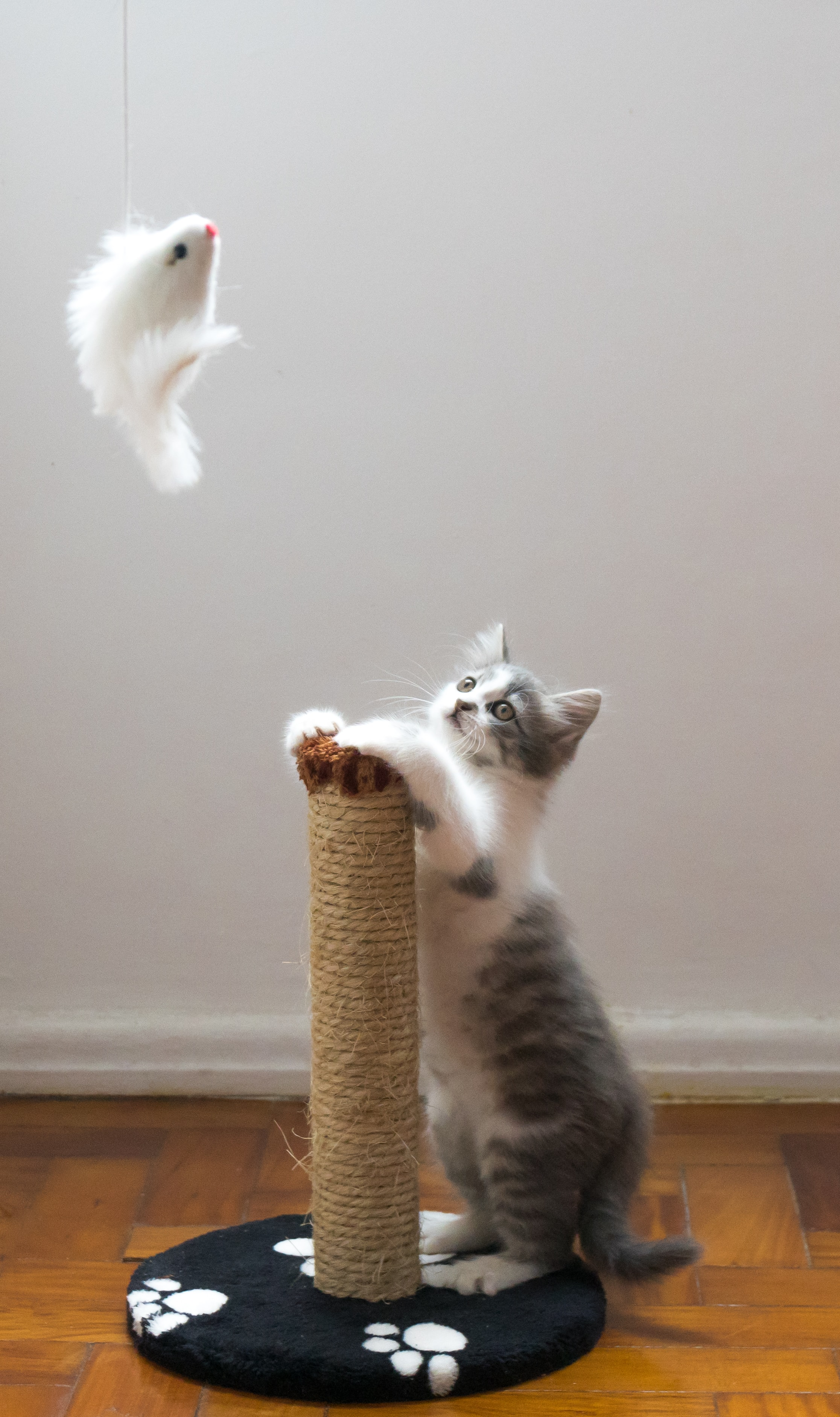 15 homemade cat toys - kitten playing with toy